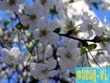 Во Владивостоке зацветут сады